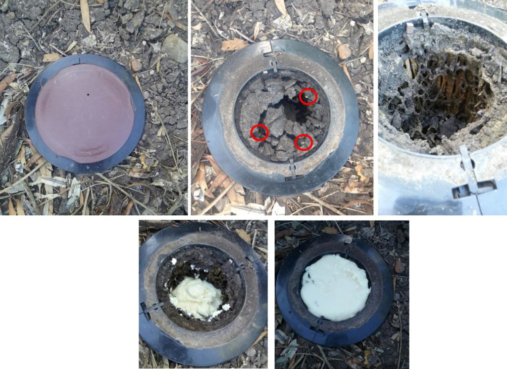 Termite Control Using Exterra Baiting System Total Pest Services Dalby