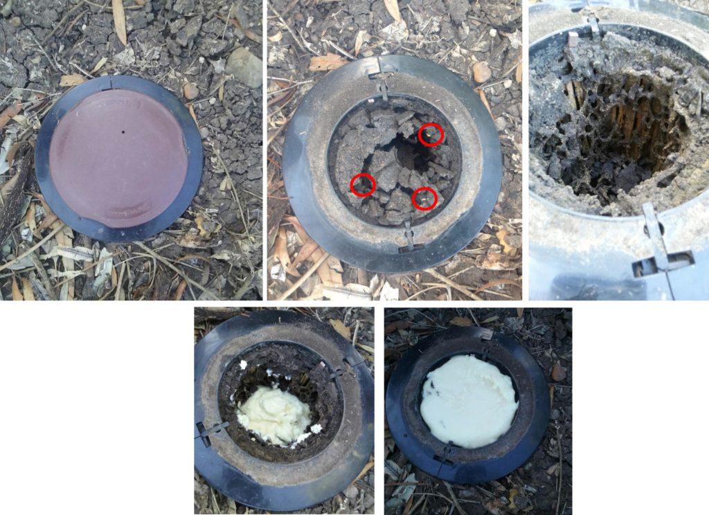 Termite Control Using Exterra Baiting System Total Pest